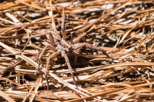 JMH_0647 spider